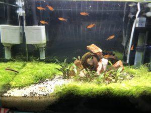 水草2ヶ月後