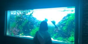 すみだ水族館水槽5