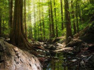 森林レイアウト2