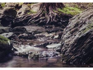 渓流レイアウト1