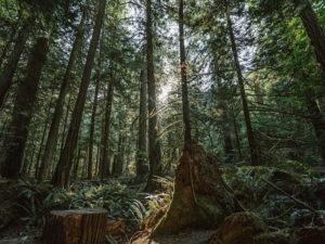森林レイアウト4