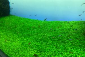 グロッソスティグマのフロント画像