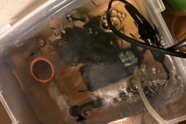 水槽に移した魚