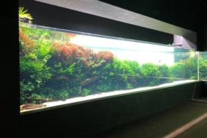 リスボン海洋水族館 ネイチャーアクアリウム