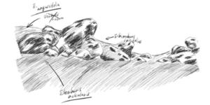 清流の石景