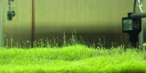 ウォーターローン水中花