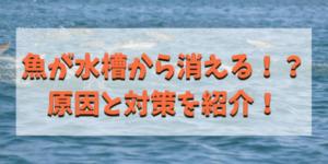 魚が消えるアイキャッチ