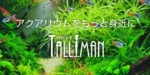 Aquarium TALLMAN