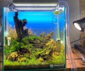 双葉aquarium