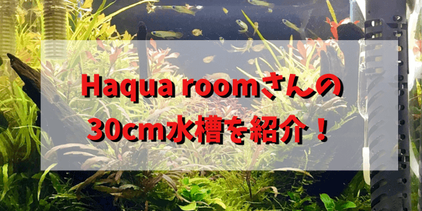 Haqua room アイキャッチ