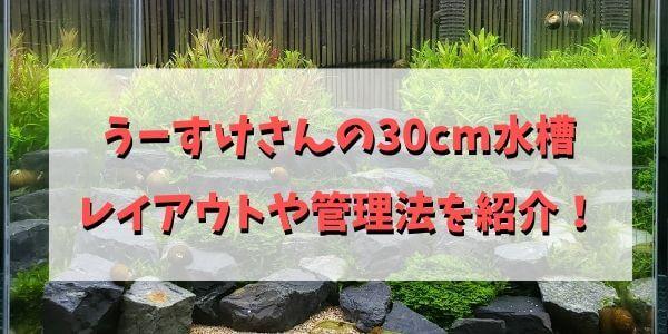 うーすけさんの30cm水槽 レイアウトや管理法を紹介!