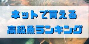 ネットで買える 高級魚ランキング(淡水_海水)