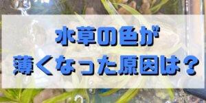 水草の色が薄くなった原因とは? 水草の緑を濃く復活させる方法 (1)