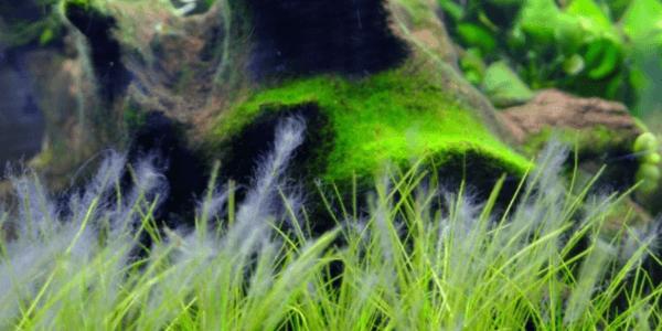 苔に覆われたショートヘアグラス