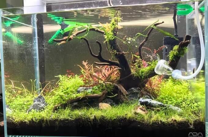 aquarium Minami