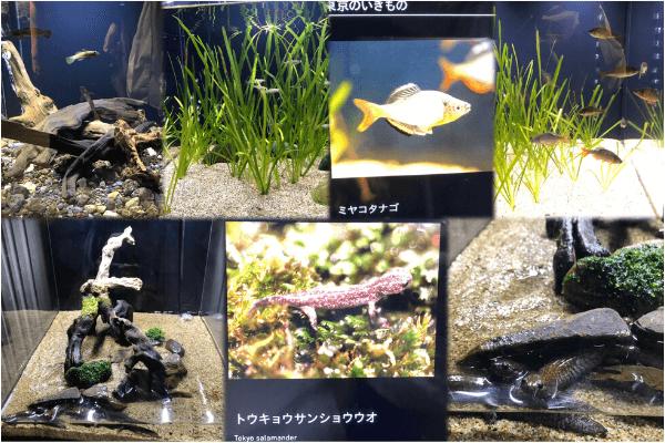 すみだ水族館の東京生き物展示