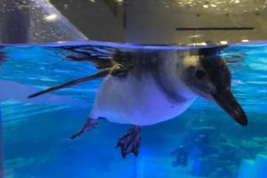 ペンギンのドアップ