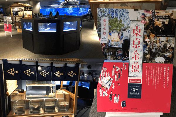 入り口にある東京金魚(すみだ水族館)