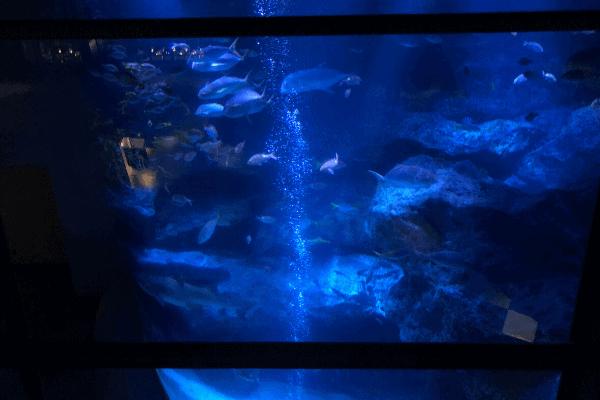 すみだ水族館「上から見た小笠原大水槽」
