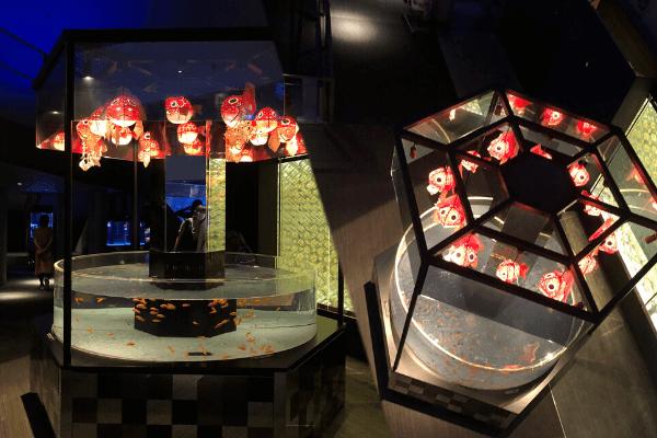 江戸金魚コーナー