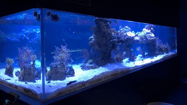 すみだ水族館「サンゴの群生」