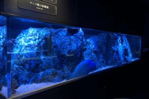 サンゴ礁の水槽