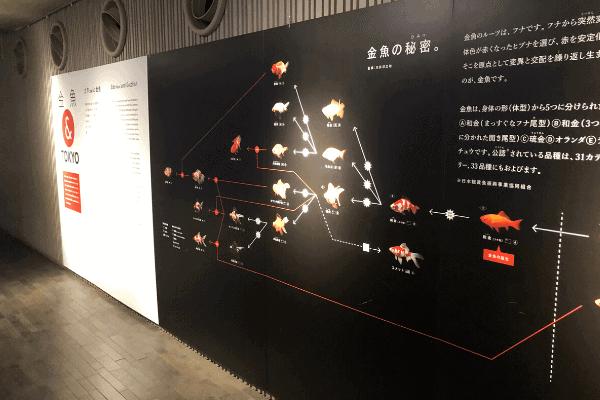 金魚の掲示板