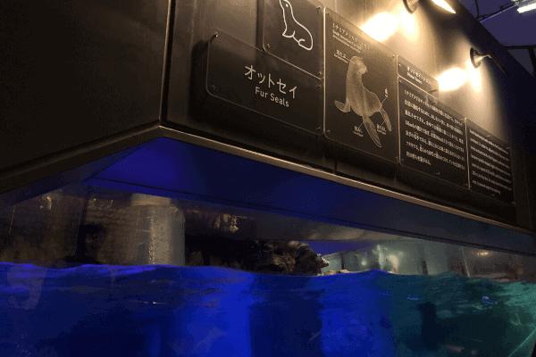 すみだ水族館のオットセイコーナー