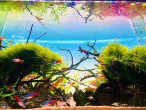 熱帯魚の様子