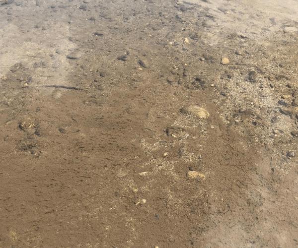 多摩川の水質