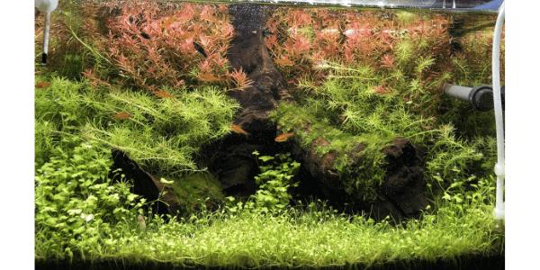 45cm水草水槽レイアウト