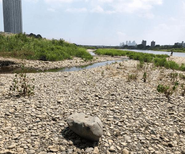 多摩川河川敷