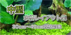 30cm水槽・40cm水槽レイアウト集