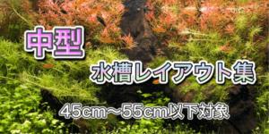 45cm・53cm水槽レイアウト集