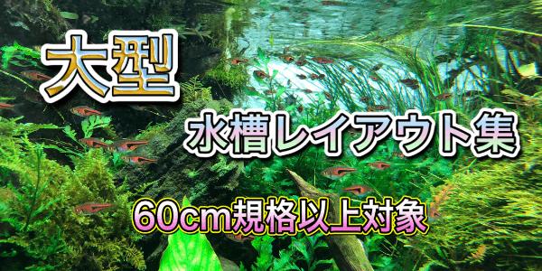 60cm・90cm・120cm水槽レイアウト集