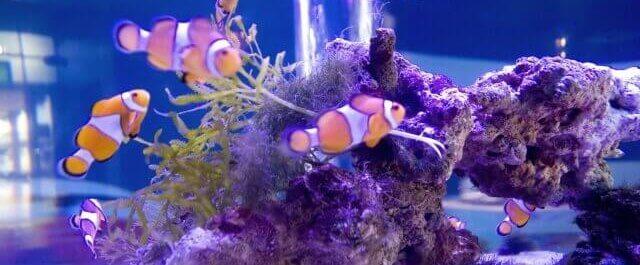 海水魚・サンゴ