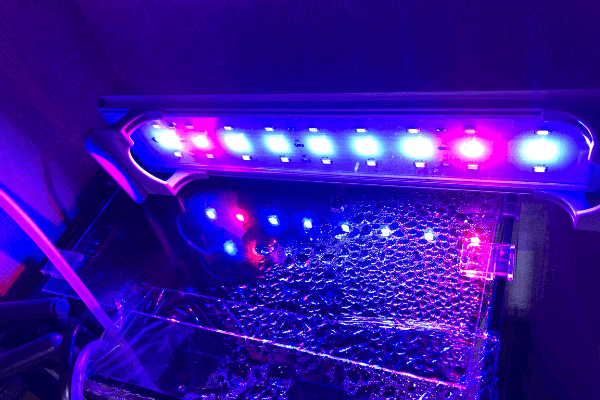 JOOCII水槽ライト