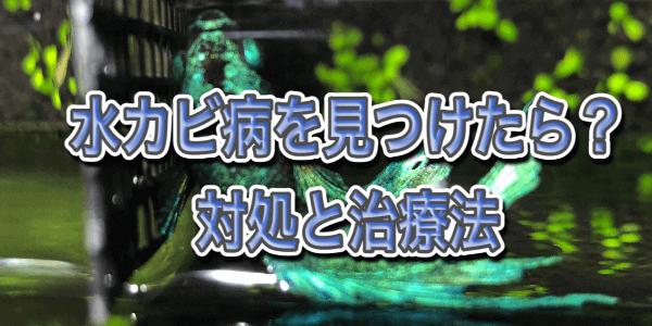 水カビ病の対処と治療方法