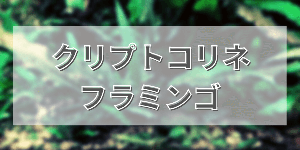 クリプトコリネフラミンゴの育て方