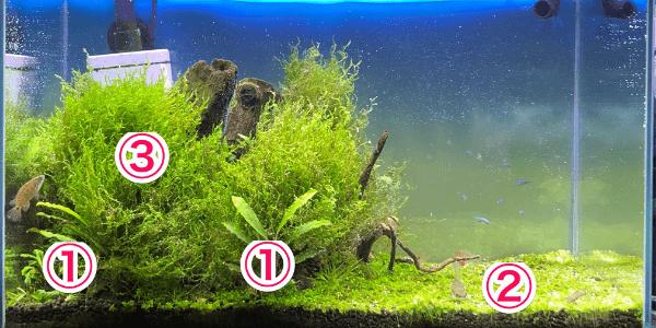 45cm水槽レイアウトの水草配置