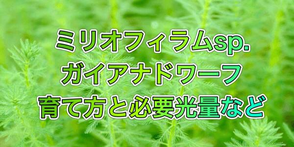 ミリオフィラムsp.ガイアナドワーフの溶ける原因と対策