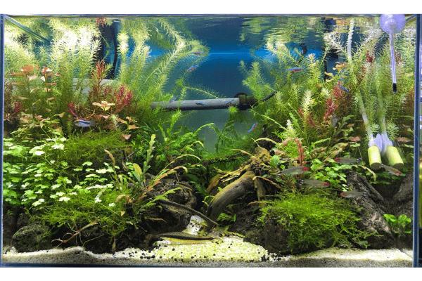 水槽全体の成長を判断