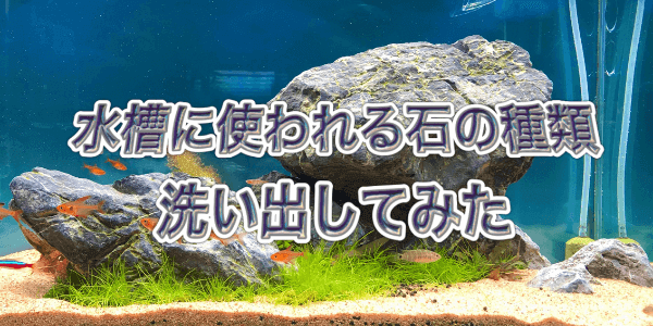 水槽レイアウトに使われる石の種類
