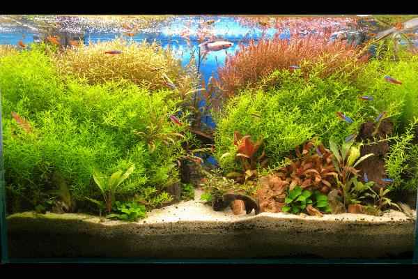 赤い水草が育つ